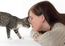bigstockphoto_woman_with_cat_734854