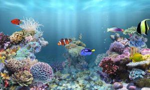 Peces: Consejos para comprar un acuario y su cuidado y mantenimiento en casa