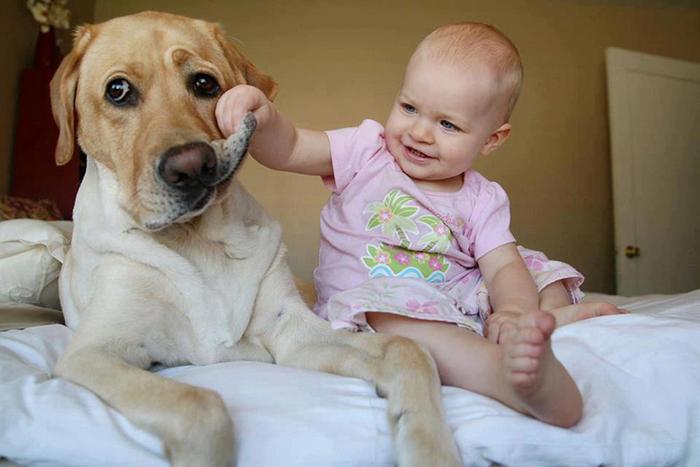Como preparar a tu perro para la llegada de un nuevo bebé